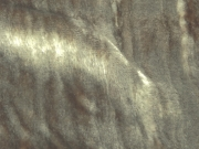 928-516-Sepia-Burlwood